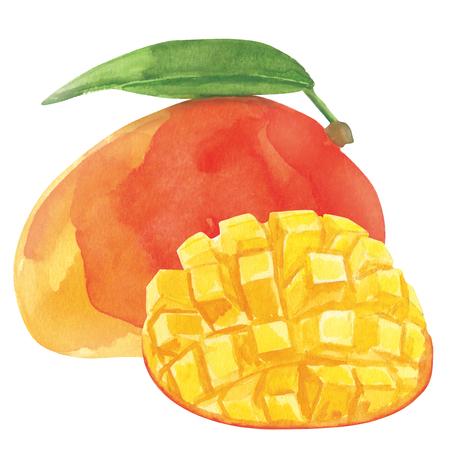 水彩の新鮮な完熟マンゴー果実は、白い背景で隔離のクローズ アップ。紙の上の手の絵画