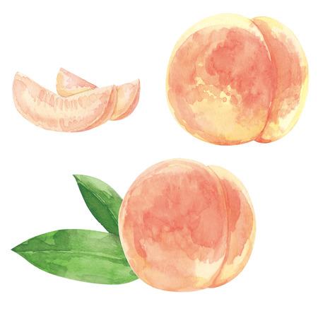 복숭아 수채화 물감