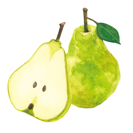 PEAR. watercolor painting on white background 스톡 콘텐츠