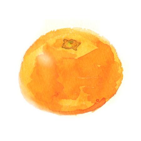 Mandarin Orangen Standard-Bild - 80426539