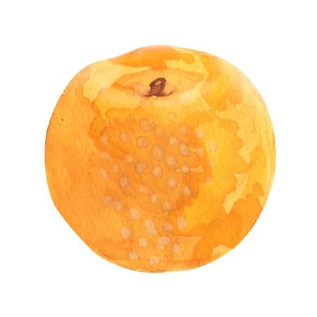 배. 흰색 배경에 수채화 그림
