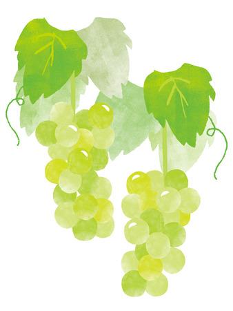 grape, white grape, and bear fruit