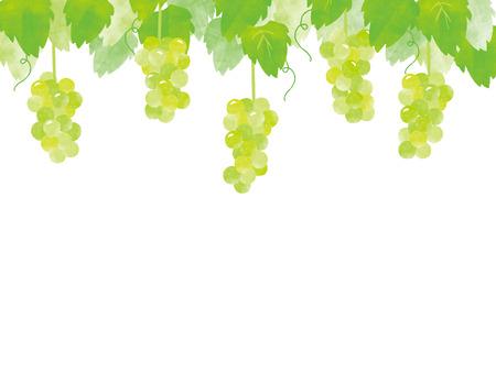 ready to eat: grape, white grape, and bear fruit