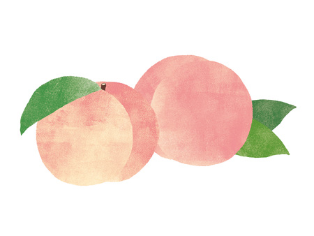 Peach. watercolor painting on white background 스톡 콘텐츠