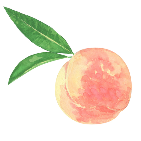 Peach watercolor Фото со стока - 80463298
