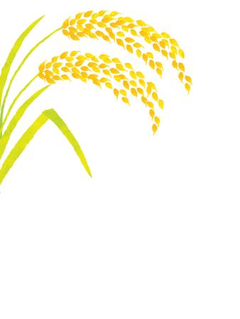 harvesting rice: crop background