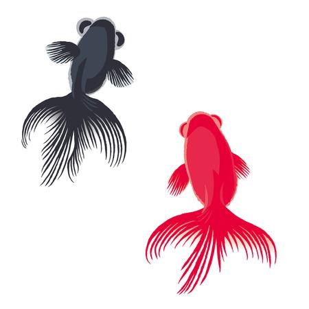 Vector illustration of goldfish isolated on white background. 일러스트