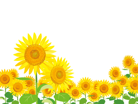 Vector Illustration: wallpaper and background landscape sunflowers garden and sky. Vettoriali