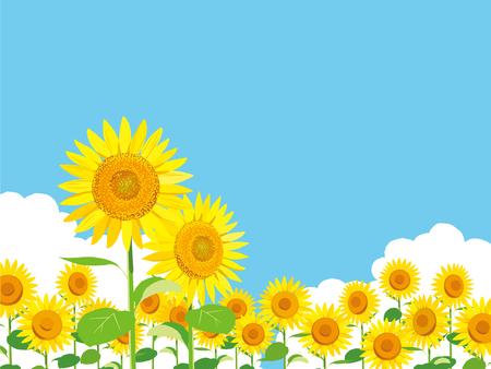 ベクトル イラスト 壁紙と背景ひまわりの庭と空を景色します のイラスト素材 ベクタ Image 8043