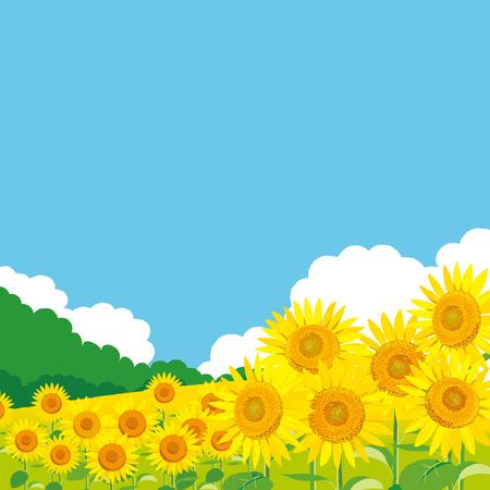 """Vektorabbildung: Tapeten- und Hintergrundlandschaftssonnenblumen Garten und Himmel. """"Sommergrüße an dich."""" Standard-Bild - 83808852"""