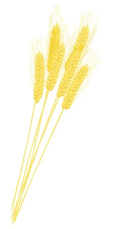 Bouquet of ears of wheat Illustration