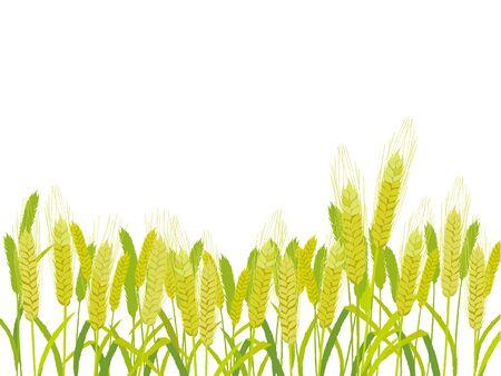 rye: Farm Field of Wheat vector illustration.