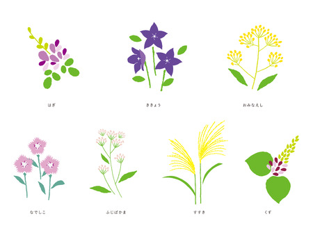 The seven flowers of autumn, vector illustration on white background.