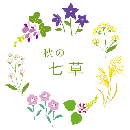 The seven flowers of autumn  Japanese translation is The seven flowers of autumn. Illustration
