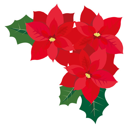 vector illustration of Christmas card with poinsettia flower Illustration