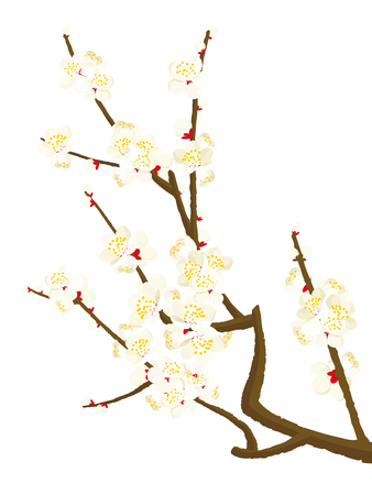 Plum blossom vector illustration