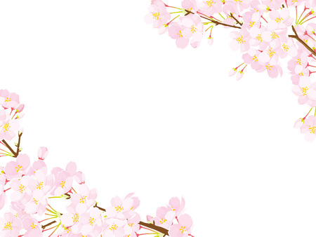 Pink Cherry blossom, Vector Illustration