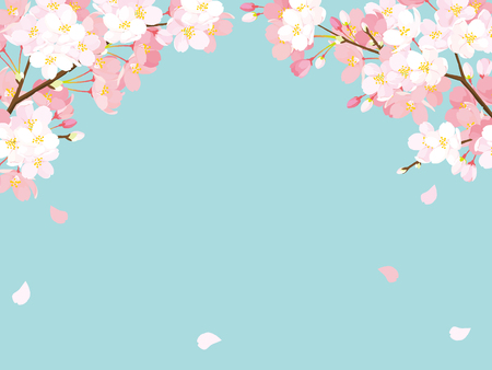 Pink Cherry blossom, Vector Illustration Banco de Imagens - 93215850