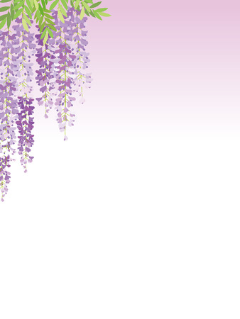 The wisteria flower trailing plant background. Vector illustration.