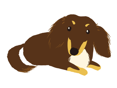 Cute dachshund sitting on a white background