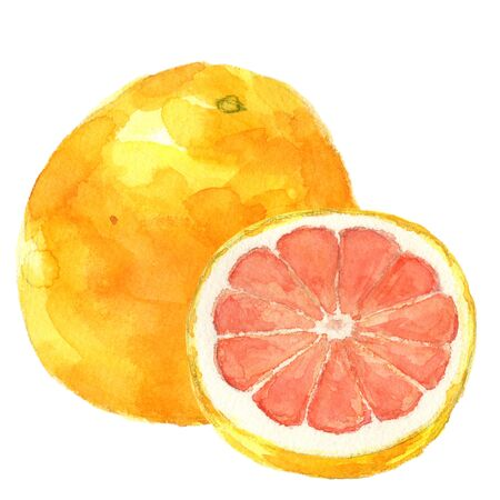 Pink grapefruit. watercolor painting on white background Stok Fotoğraf - 129345733