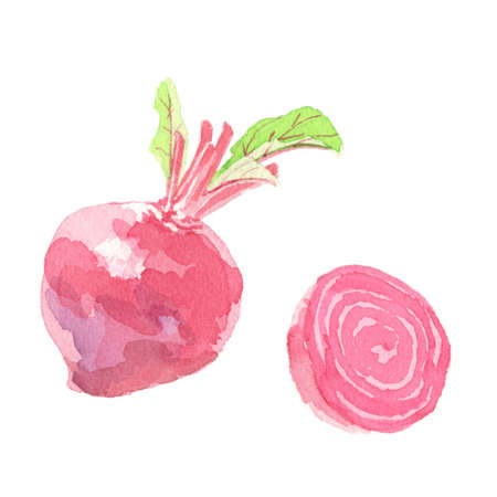 Beets Watercolor Illustration