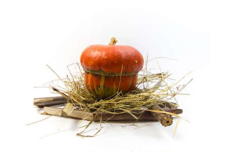 brushwood: Pumpkin in nest and brushwood