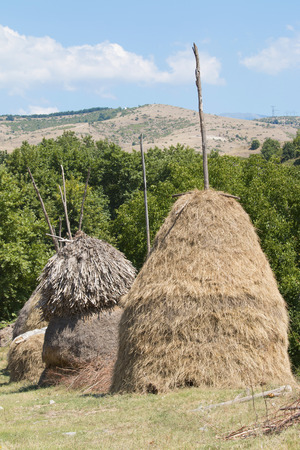 hayroll: Hand made bales of hay on rural landscape