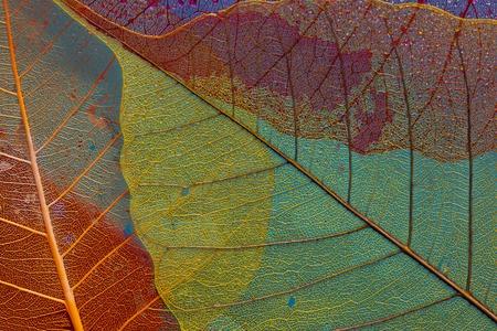 silhouette leaf three skeleton color