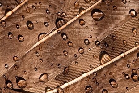 Macro photography of a water drops on a birds feather Stock Photo