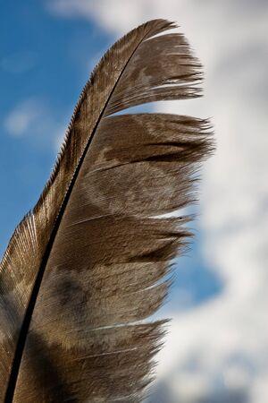 Feather bird of prey on blue sky