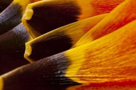 tulip petals macro colored detail Stock Photo