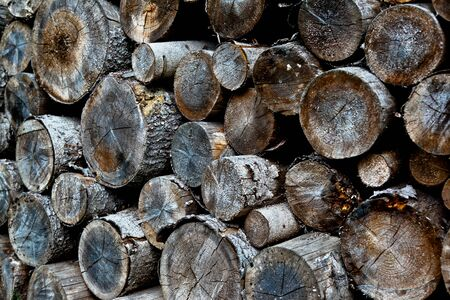 pile of old wooden logs Stock Photo
