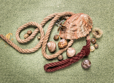 mussels and snail shells on a green carpet