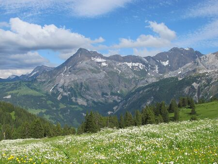 Meadow with flowers and mountains in the Alps