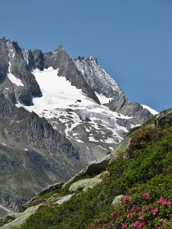 Mountains and Alpenrosen, wildflowers of the Rhododendron family Stock Photo - 14557561