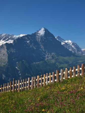 Meadow With Flowers In Front Of The Eiger Stock Photo - 14745005