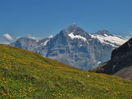 monch: Meadow Full Of Wildflowers, Eiger And Monch