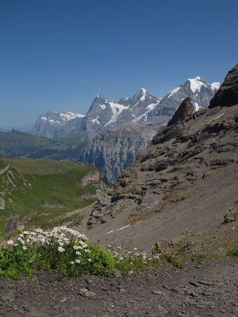 Summer Scene In The Bernese Oberland Stock Photo - 15225559