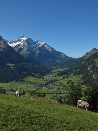 Gsteig Bei Gstaad, Oldenhorn And Cows photo