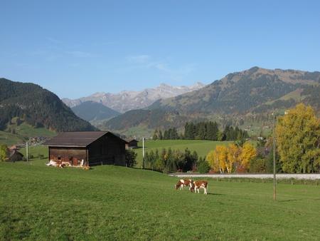 saanenland: Idyllic Autumn Scene In The Saanenland