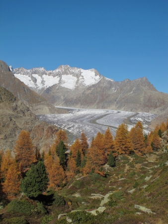 Colorful Trees, Glacier And Mountains photo
