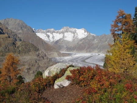 aletsch: Colors Of Autumn In The Aletsch Area