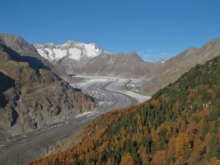 Colorful Larch Wood And Aletschgletscher photo