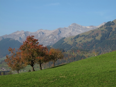 canton berne: Cherry Trees In The Autumn, Mountains