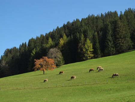 Autumn Scenery In Gstaad Stock Photo - 16459263