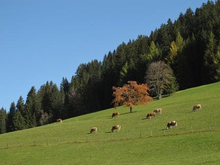 Rural Scene In The Autumn Stock Photo - 16459247