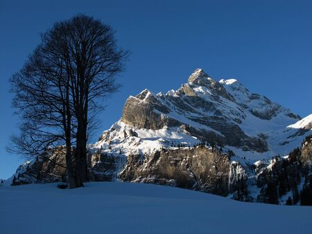 Mountain named Ortstock at sunrise and tree, Braunwald Stock Photo - 17604147