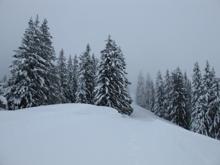gstaad: Forest in the winter, fog Stock Photo