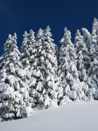 gstaad: Snow covered row of trees Stock Photo